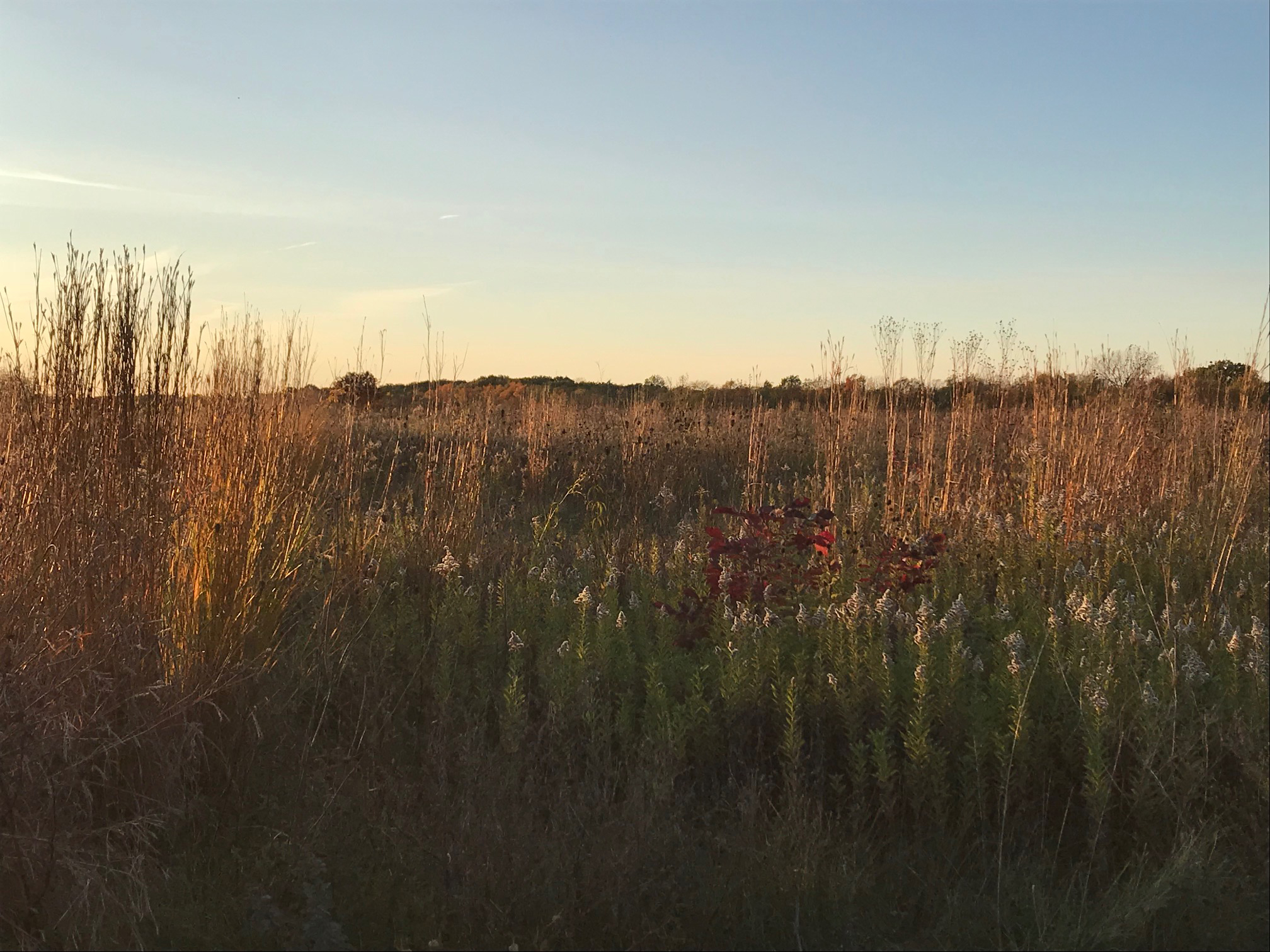 Prairie at Sunset