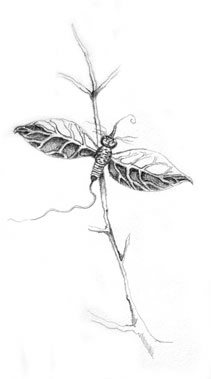 Le Bug